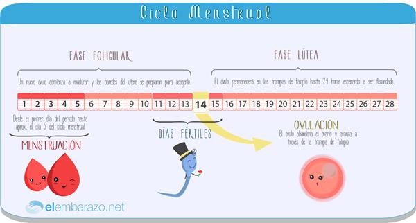 ciclo_menstrual_blog
